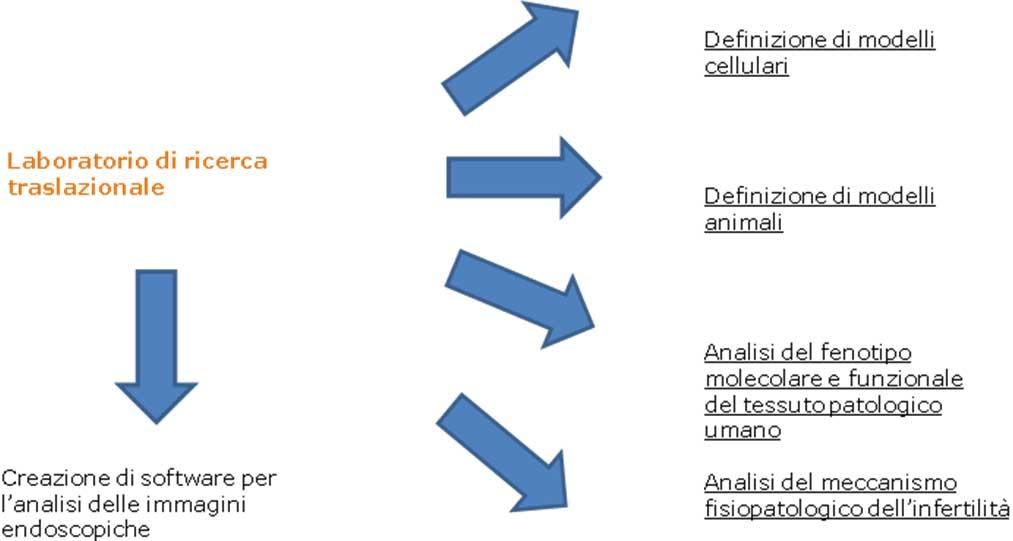 CENTRO-ITALIANO-ENDOMETRIOSI-ricerca-traslazionale-02